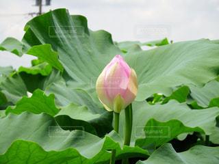 花の写真・画像素材[637744]