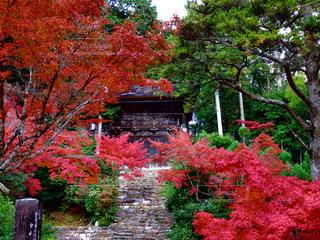 近くのツリー前の花壇の写真・画像素材[861746]