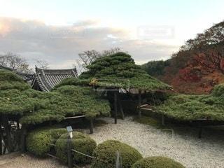 庭の植物の写真・画像素材[861926]