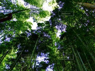 竹林の写真・画像素材[1130201]