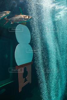 魚の写真・画像素材[476188]