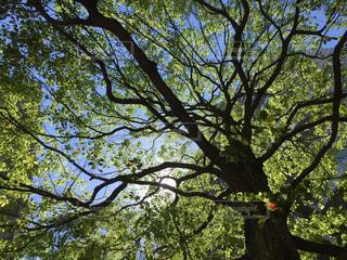 木の写真・画像素材[513862]
