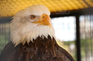 動物の写真・画像素材[476726]