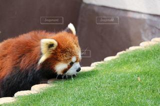 動物の写真・画像素材[476727]