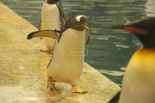 動物の写真・画像素材[476729]