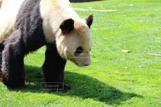 動物の写真・画像素材[476730]