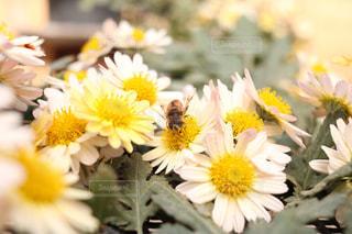 花の写真・画像素材[476777]
