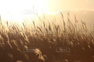 近くの植物のアップの写真・画像素材[864402]