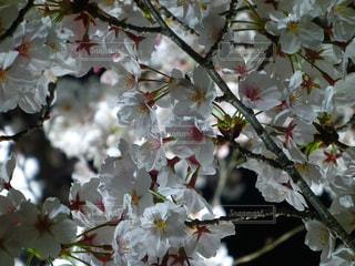 春 - No.481402