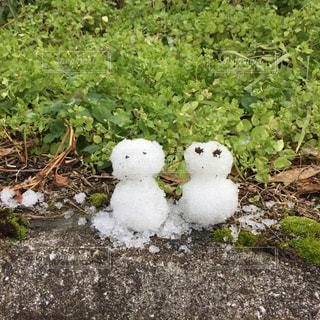 雪だるまの写真・画像素材[1029771]