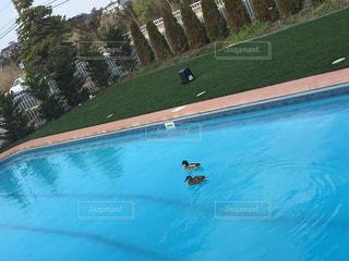 プールの写真・画像素材[484804]