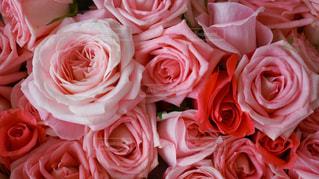 薔薇の花束の写真・画像素材[480727]