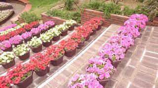 花の写真・画像素材[498735]