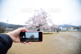 春 - No.477408