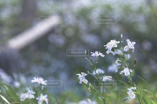 春 - No.484707
