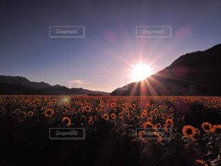 自然の写真・画像素材[486145]