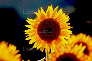 自然の写真・画像素材[486147]