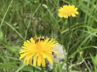 花の写真・画像素材[479834]