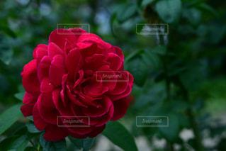 植物 - No.477722