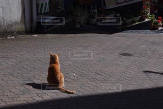 猫 - No.477724
