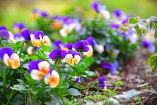 植物 - No.477730