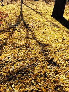 秋の写真・画像素材[477668]