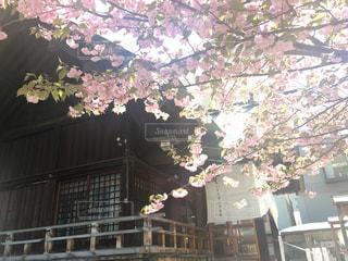 春の写真・画像素材[486887]