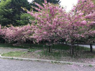 公園 - No.495446