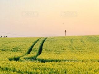 麦畑の写真・画像素材[598610]