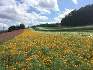 花の写真・画像素材[607272]