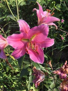 花の写真・画像素材[660783]