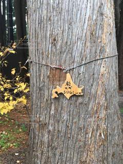 スギの木板 - No.857381