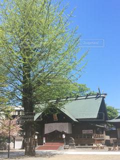 北海道神宮頓宮の写真・画像素材[874198]