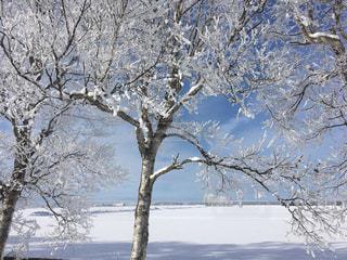 雪の木の写真・画像素材[947952]