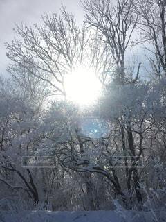 雪に覆われた木の写真・画像素材[947959]