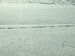 雪原の足跡の写真・画像素材[947980]