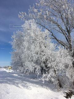 雪に覆われた木の写真・画像素材[947984]