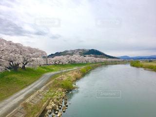 白石川一目千本桜の写真・画像素材[1123980]