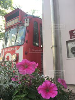 ピンクの花に鉄道の写真・画像素材[1612552]