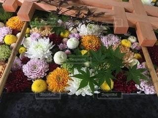 帯廣神社花手水の写真・画像素材[3563091]