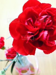 花の写真・画像素材[478654]