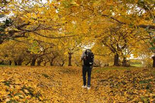 木の隣に立っている人の写真・画像素材[721110]