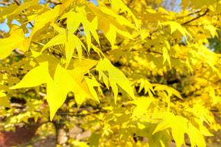 黄色の世界 - No.722867