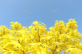 黄色の世界 - No.722868