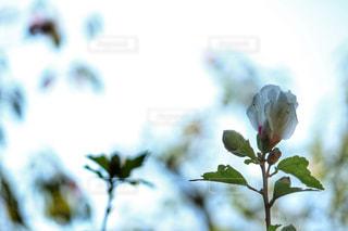 白い花 - No.857969