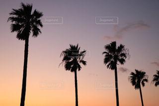夕日に映えるやしの木の写真・画像素材[862008]