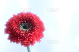 部屋に飾れる花の写真・画像素材[930008]