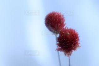 近くの花のアップの写真・画像素材[930010]