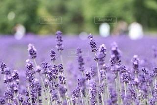花畑の写真・画像素材[3606309]