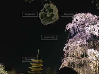 No.478772 桜